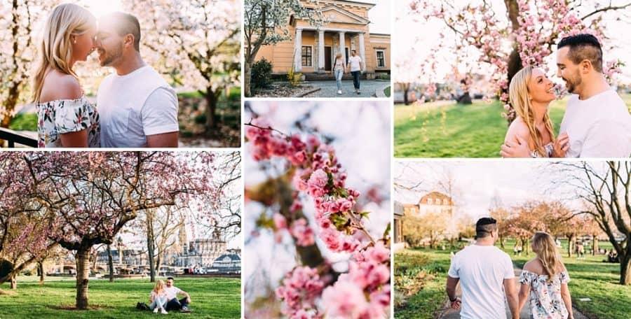 engagementshsoting in dresden zur Kirschblüte