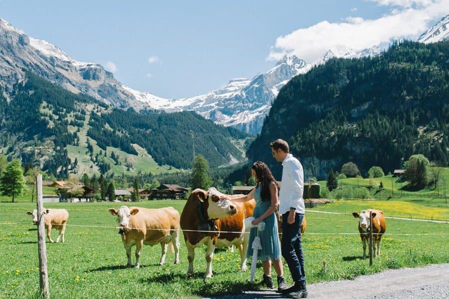 paar steht an einer Almwiese und beobachtet Kühe